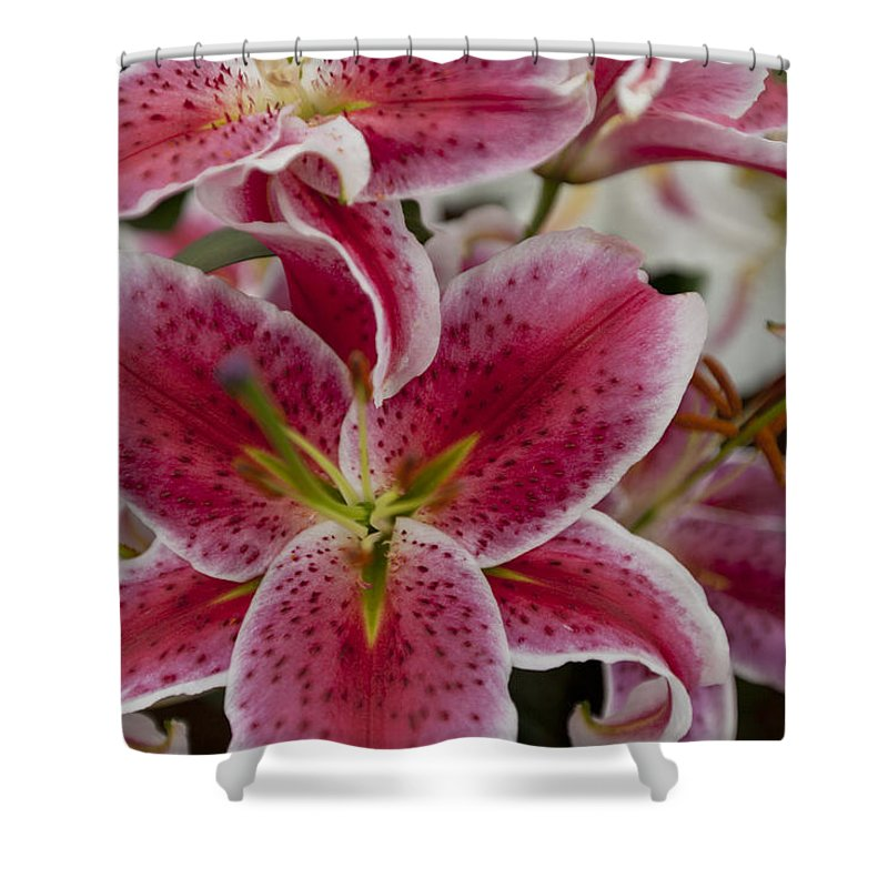 Rhs Shower Curtain featuring the photograph Pink Leopard by Maj Seda