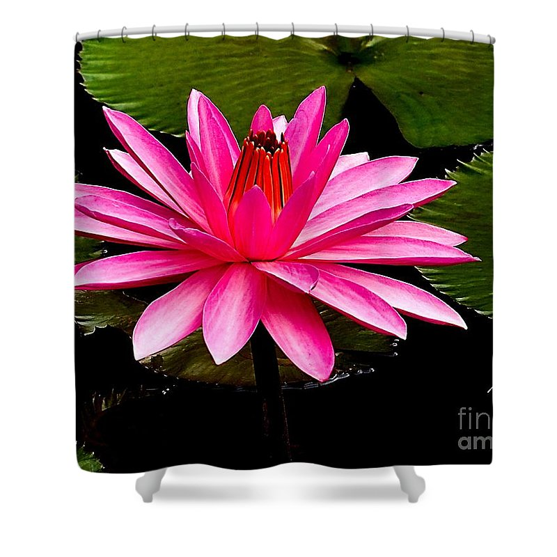 Aquatic Shower Curtain featuring the photograph Pink Lily by Nick Zelinsky