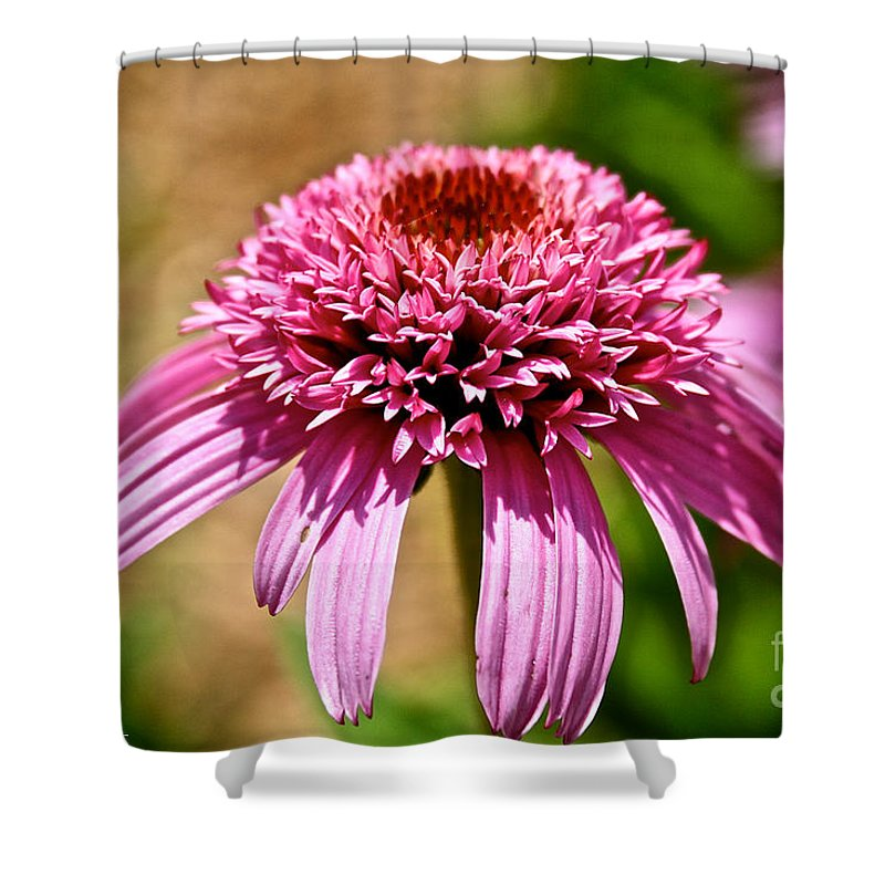 Outdoors Shower Curtain featuring the photograph Pink On Pink by Susan Herber