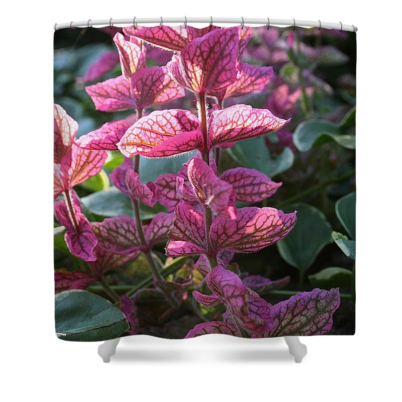 Outdoors Shower Curtain featuring the photograph Pink Periwinkle by Susan Herber