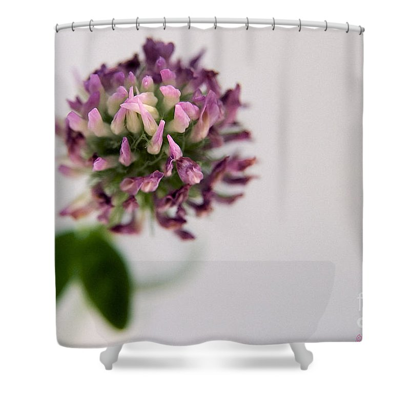 Flower Shower Curtain featuring the photograph Pink Perspective by Susan Smith