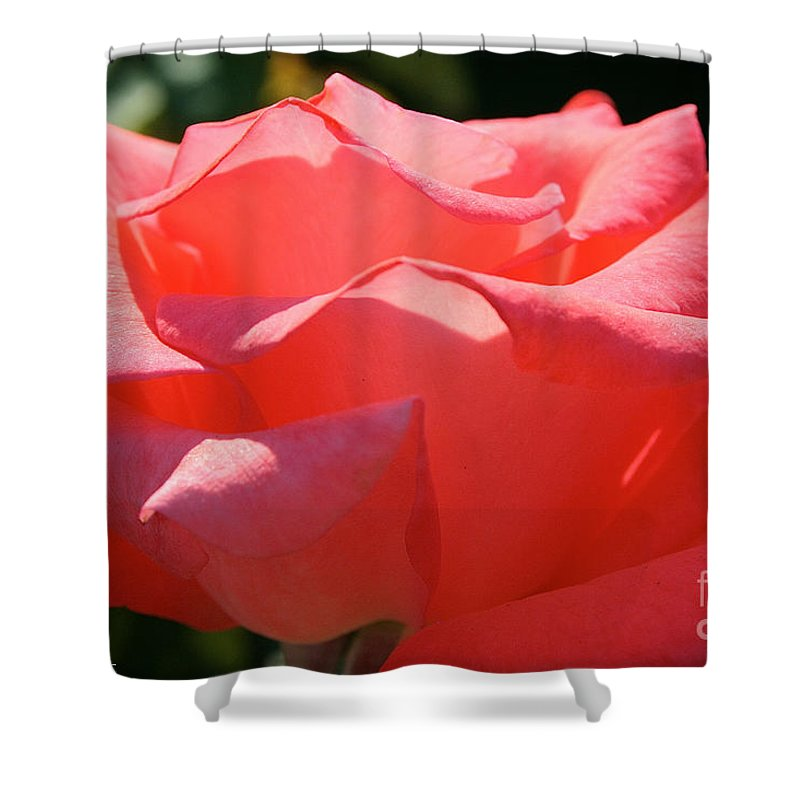 Outdoors Shower Curtain featuring the photograph Pink Touch Of Class Petals by Susan Herber