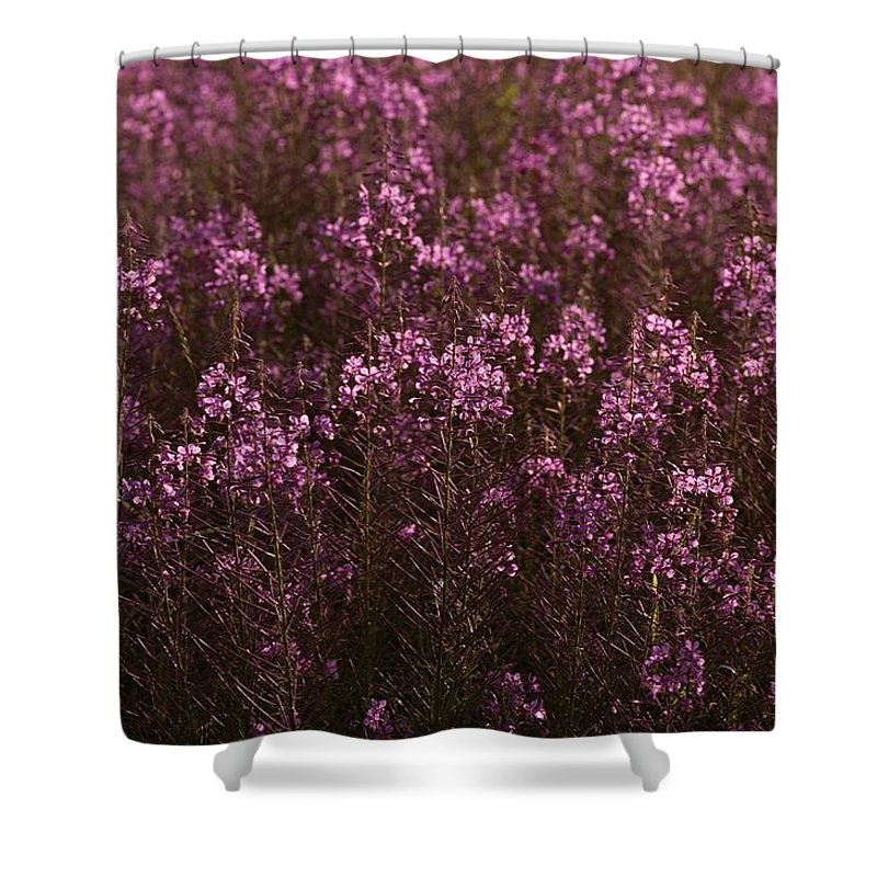 Plants Shower Curtain featuring the photograph Pink Wildflowers by Mattias Klum