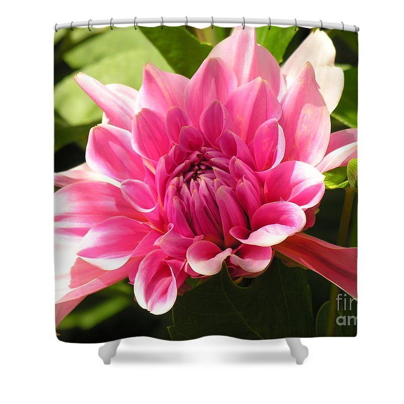Shower Curtain featuring the photograph Pinky Pink by Diane Greco-Lesser