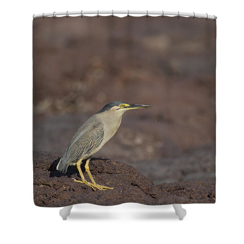 Heron Shower Curtain featuring the photograph Pint Sized by Douglas Barnard