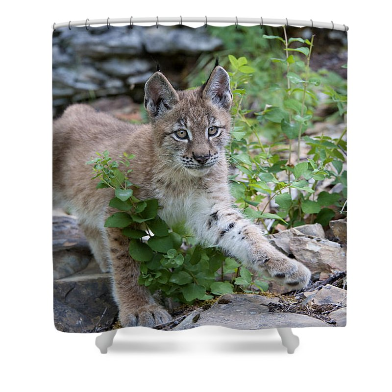 Bronstein Shower Curtain featuring the photograph Playful Afternoon by Sandra Bronstein