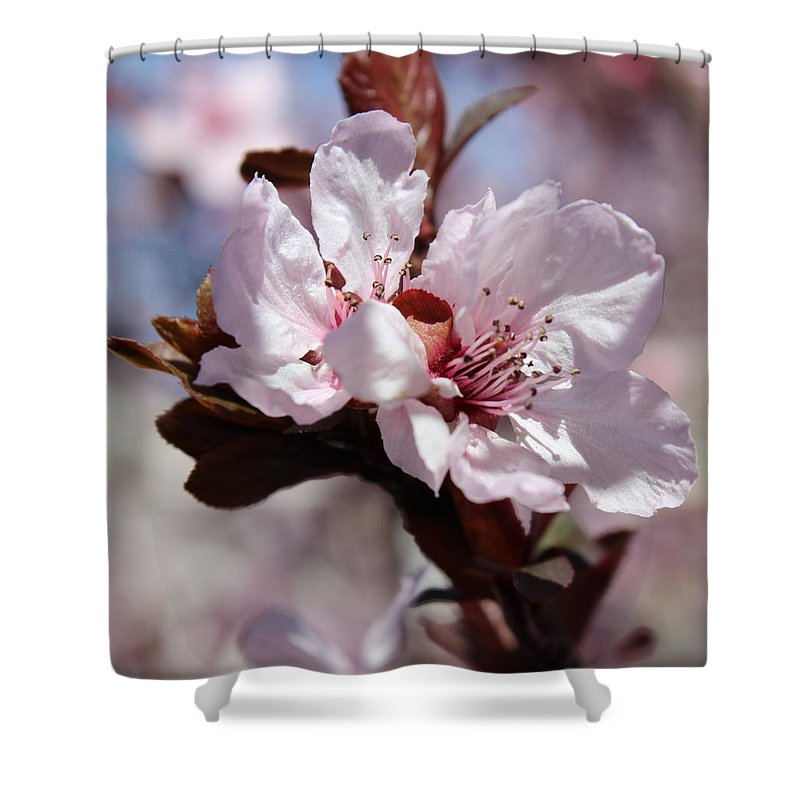 Floral Shower Curtain featuring the photograph Plum Blossoms 10 by Kume Bryant