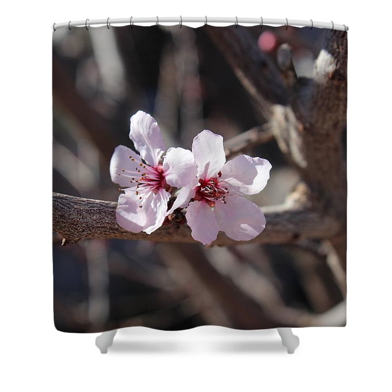 Floral Shower Curtain featuring the photograph Plum Blossoms 2 by Kume Bryant
