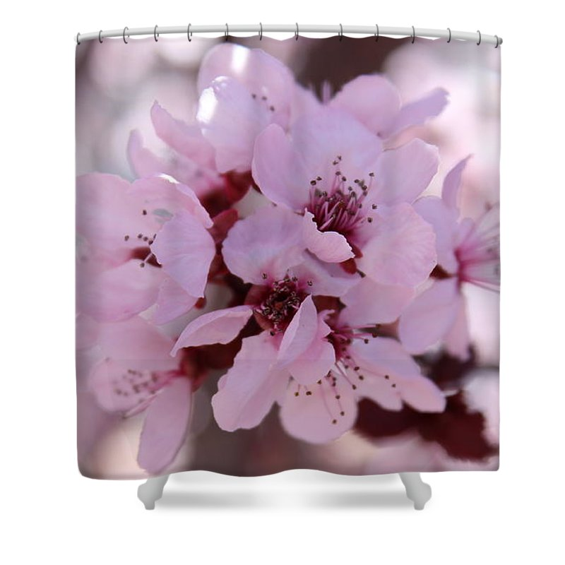 Floral Shower Curtain featuring the photograph Plum Blossoms 4 by Kume Bryant