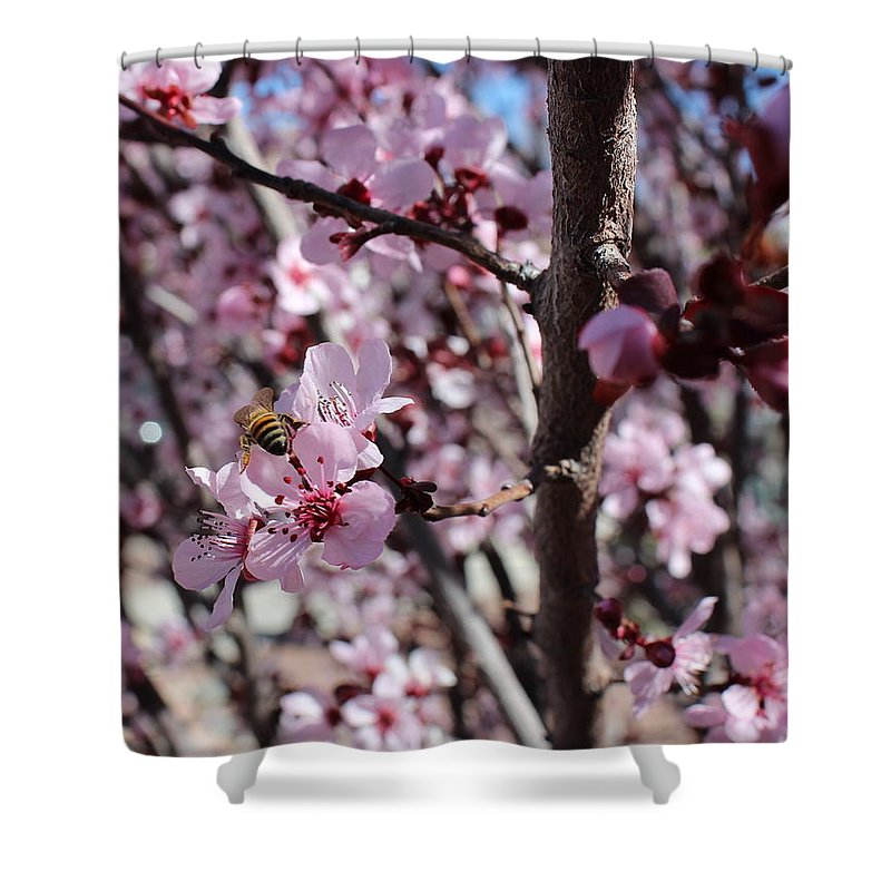 Floral Shower Curtain featuring the photograph Plum Blossoms 6 by Kume Bryant
