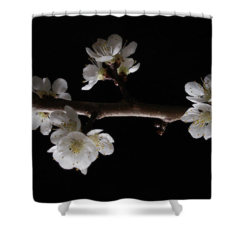 Plum Shower Curtain featuring the photograph Plum Tree Spring Blossum by Nancy Griswold