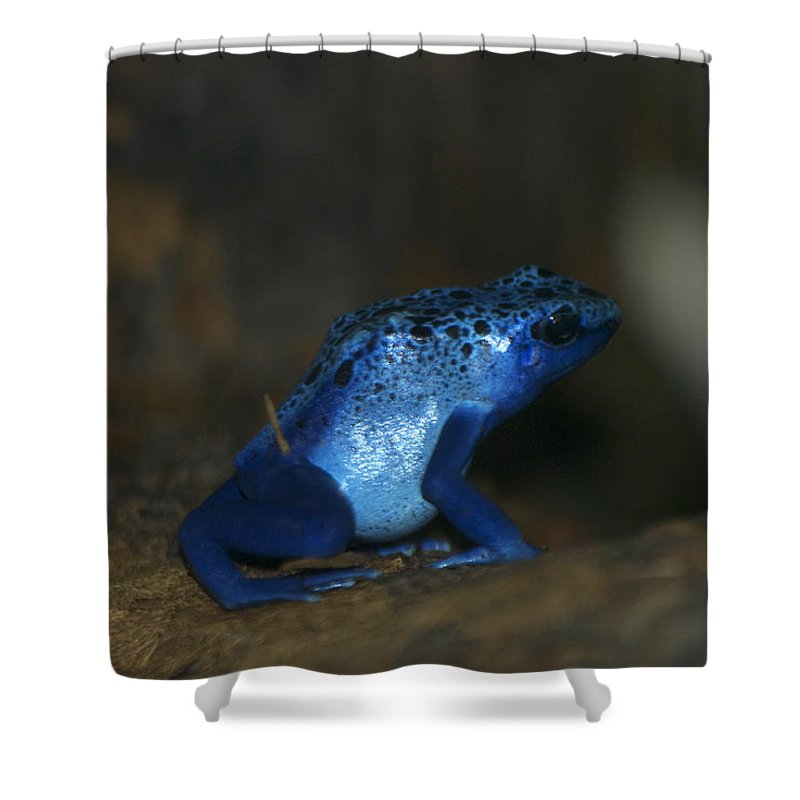 Animals Shower Curtain featuring the digital art Poisonous Blue Frog 03 by Thomas Woolworth