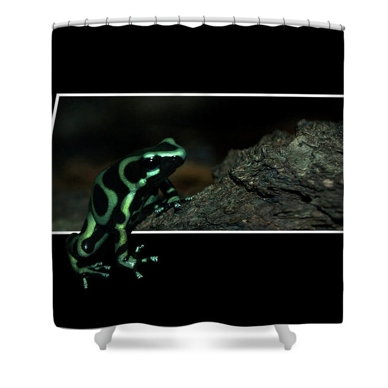 Out Of Bounds Shower Curtain featuring the photograph Poisonous Green Frog 02 by Thomas Woolworth