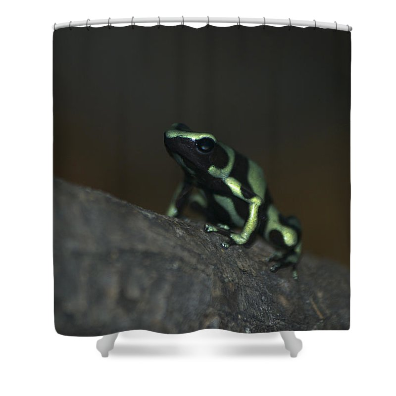Animals Shower Curtain featuring the digital art Poisonous Green Frog 03 by Thomas Woolworth