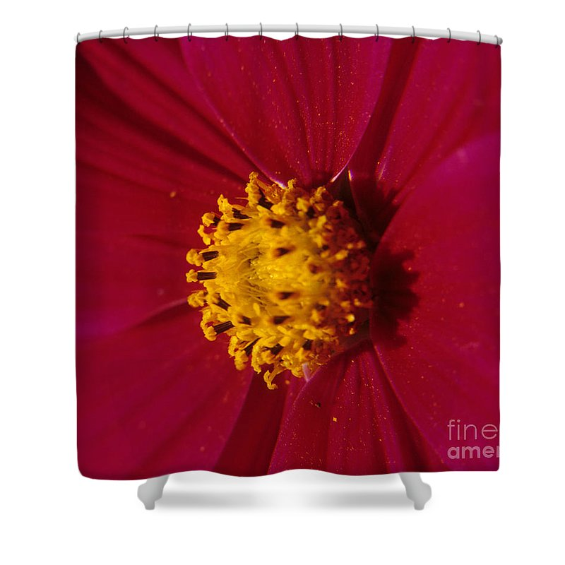 Cosmos Shower Curtain featuring the photograph Pollen Dust by Sharon Elliott