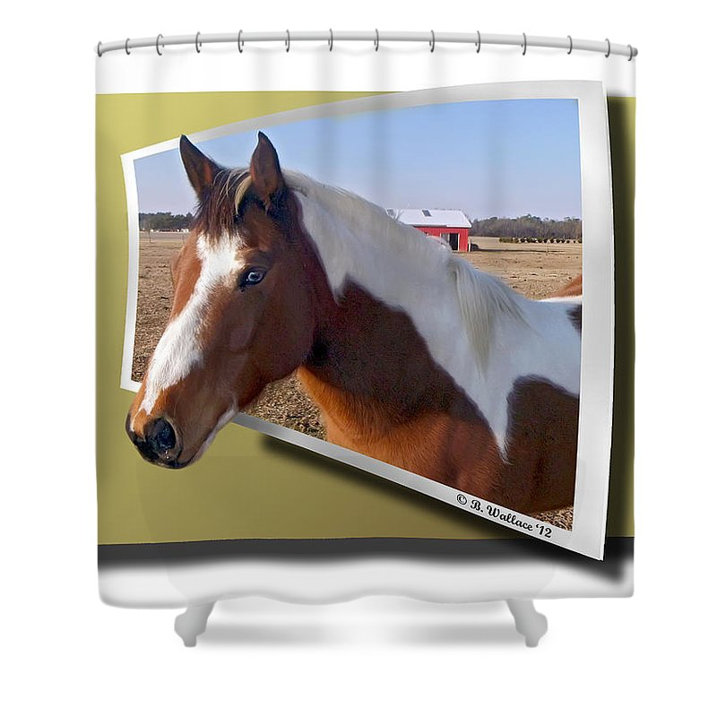 2d Shower Curtain featuring the photograph Pony Posing by Brian Wallace