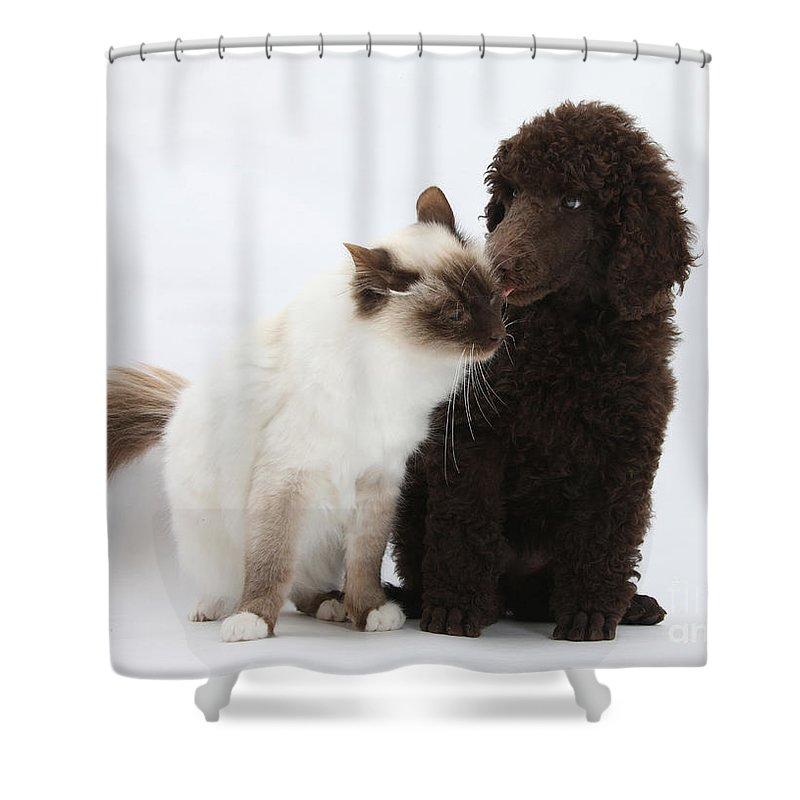 Animal Shower Curtain featuring the photograph Poodle Pup And Cat by Mark Taylor
