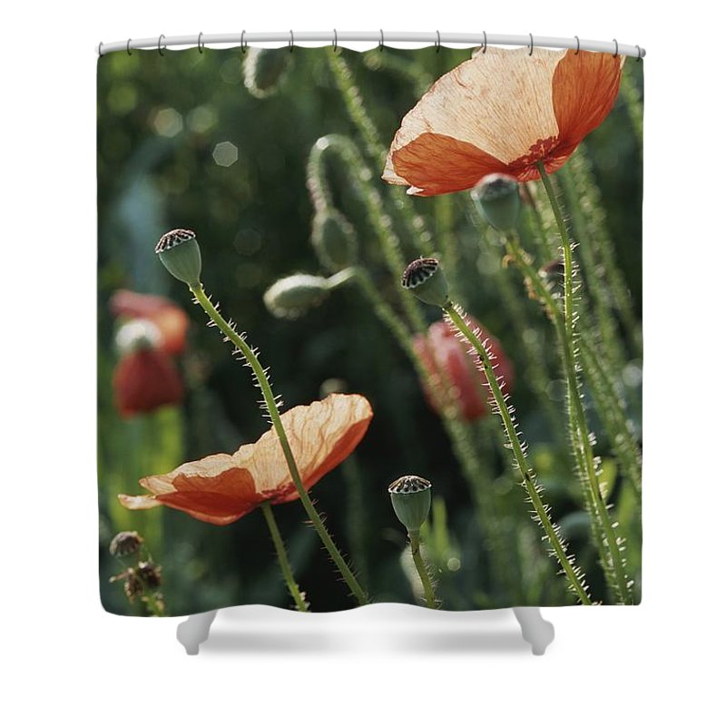 Europe Shower Curtain featuring the photograph Poppies In A Field In Provence by Nicole Duplaix