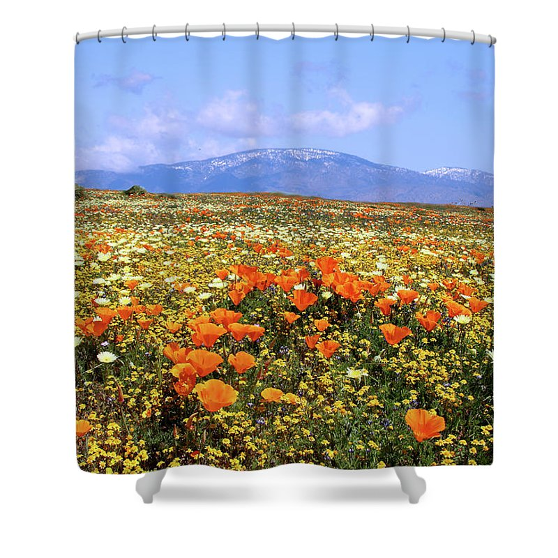 Antelope Valley Shower Curtain featuring the photograph Poppies Over The Mountain by Peter Tellone