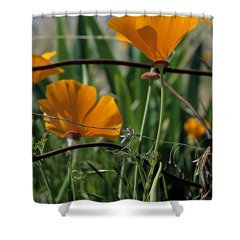 California Poppies Shower Curtain featuring the photograph Poppies by Sharon Elliott