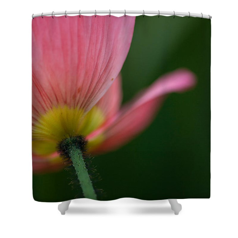 Poppy Shower Curtain featuring the photograph Poppy Details by Mike Reid