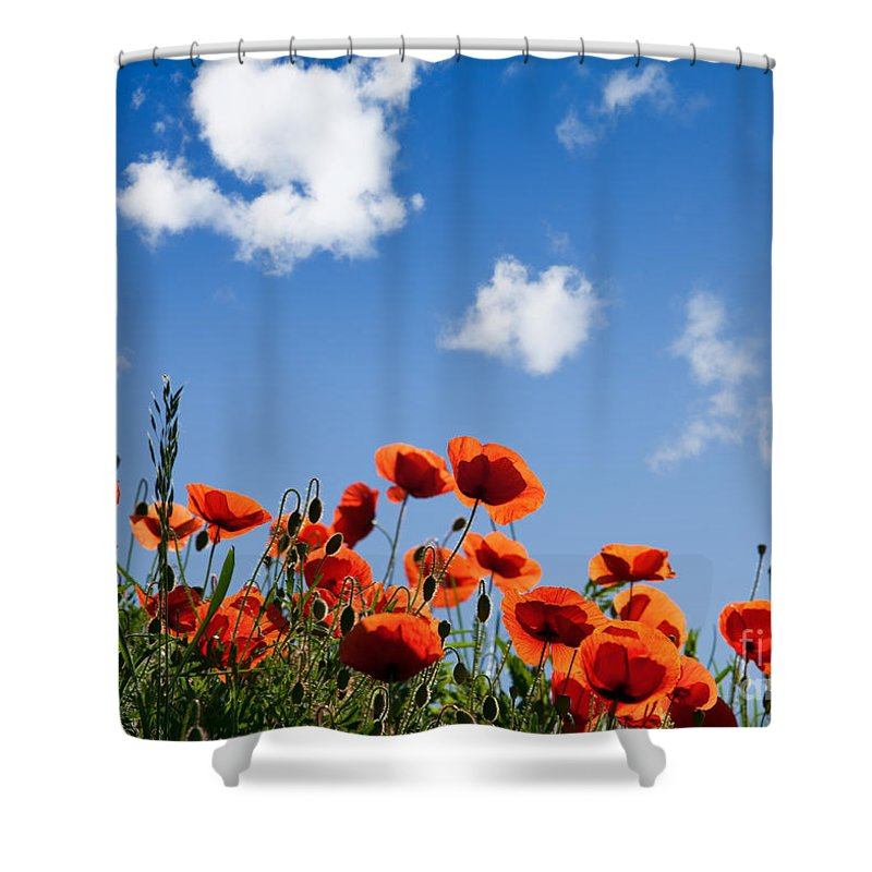 Poppy Shower Curtain featuring the photograph Poppy Flowers 05 by Nailia Schwarz