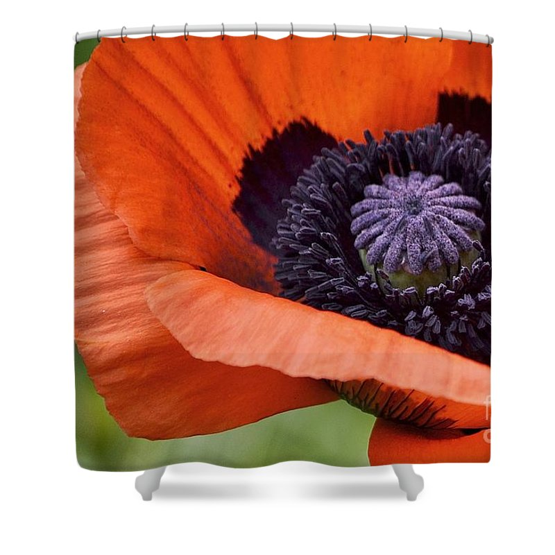 Poppy Shower Curtain featuring the photograph Poppy For Peace by Traci Cottingham