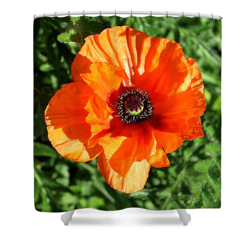 Poppy Shower Curtain featuring the photograph Poppy Blossom by John Nolan
