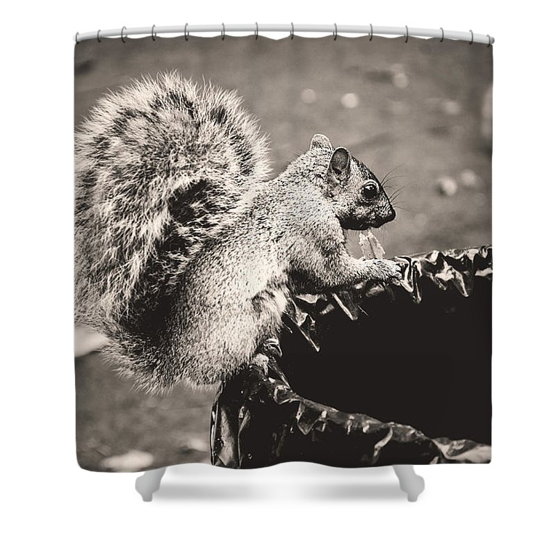 Squirrels Shower Curtain featuring the photograph Portrait Of A Trash Picker by Valerie Rosen