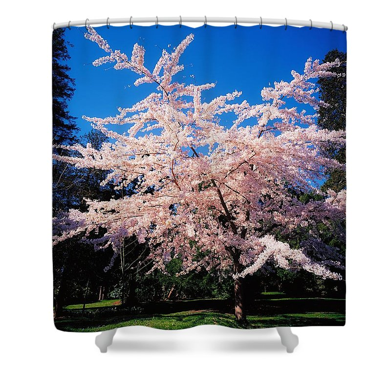 Blossom Shower Curtain featuring the photograph Powerscourt Gardens, Powerscourt by The Irish Image Collection
