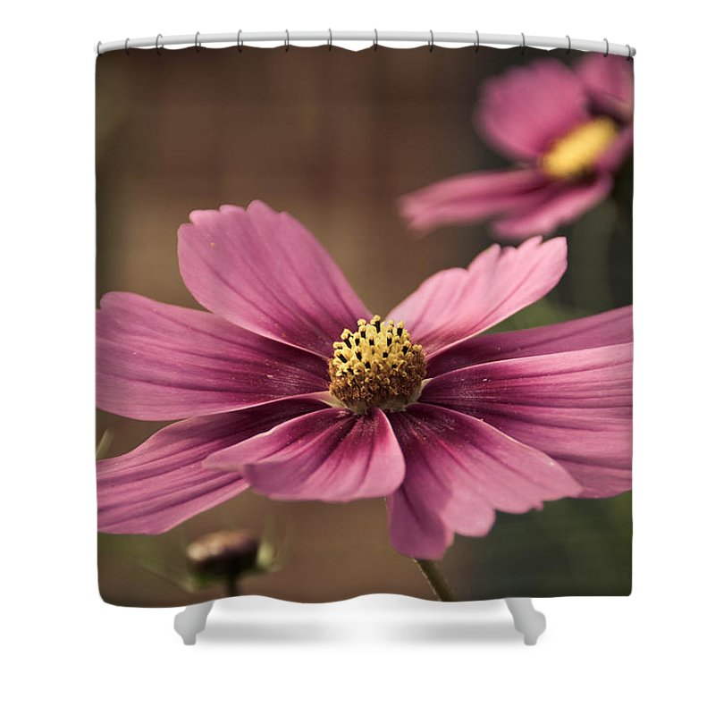 Petal Shower Curtain featuring the photograph Precious Pink by Trish Tritz
