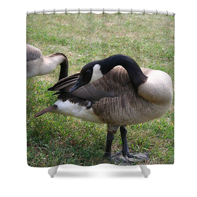 Outdoors Shower Curtain featuring the photograph Preen by Susan Herber