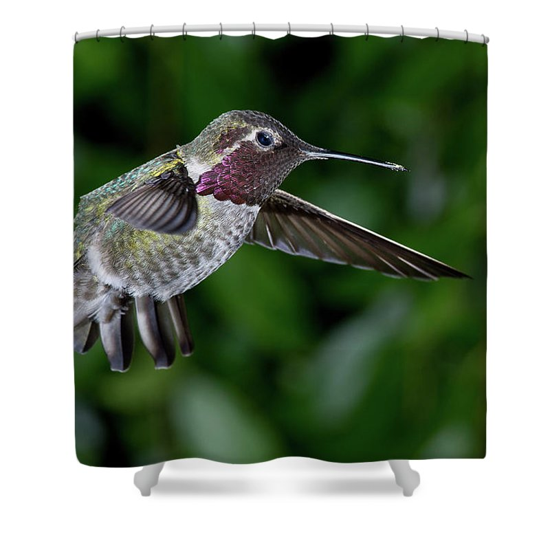 Bird Shower Curtain featuring the photograph Preparing For Attack by Greg Nyquist