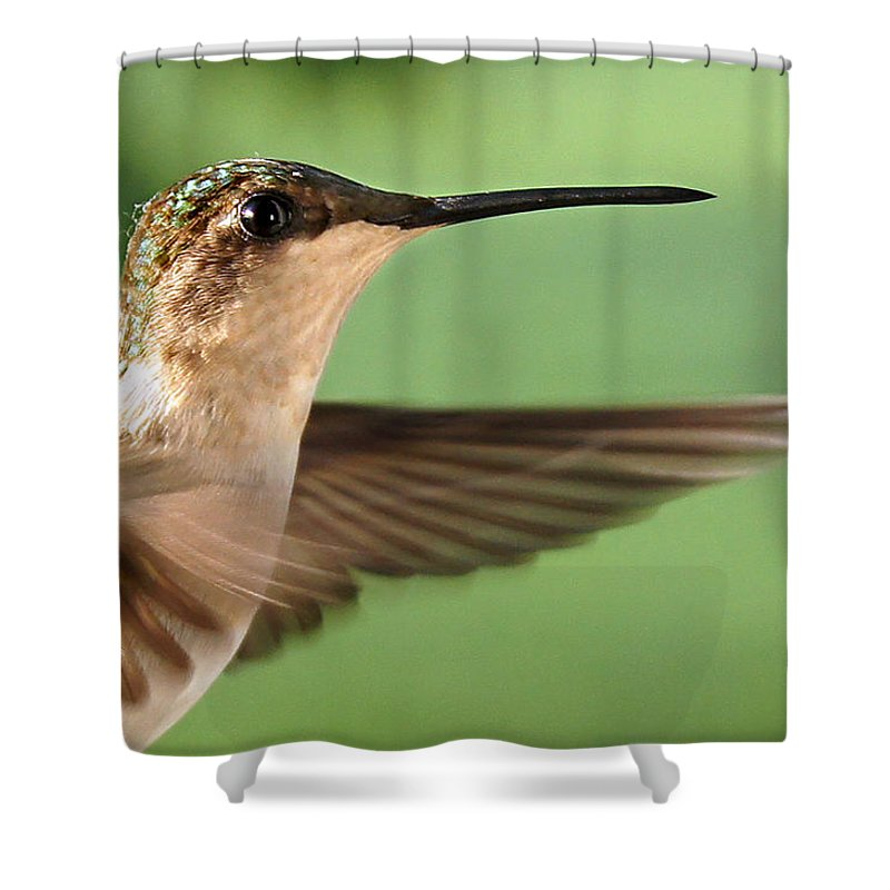 Bird Shower Curtain featuring the photograph Pretty Profile by Bill Pevlor