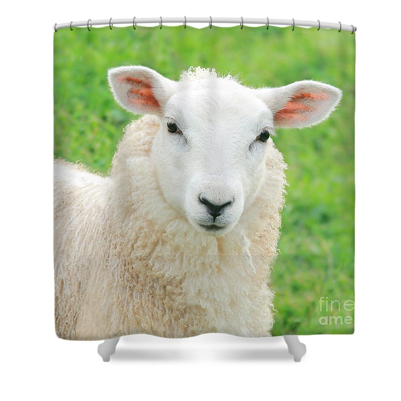 Sheep Shower Curtain Featuring The Photograph Pretty By Susan Wall