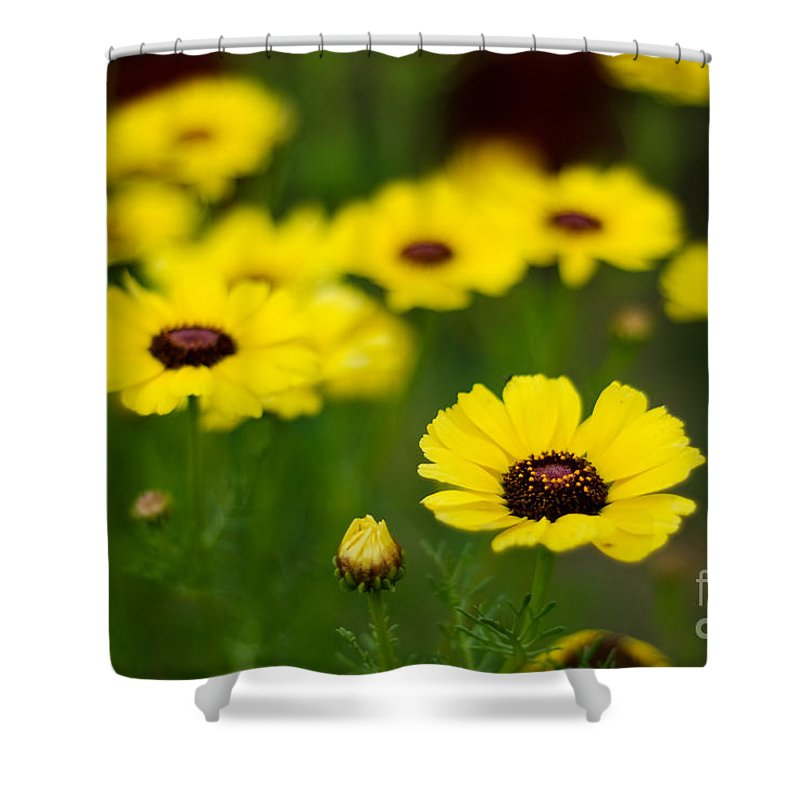 Flower Shower Curtain featuring the photograph Pretty Yellow by Syed Aqueel