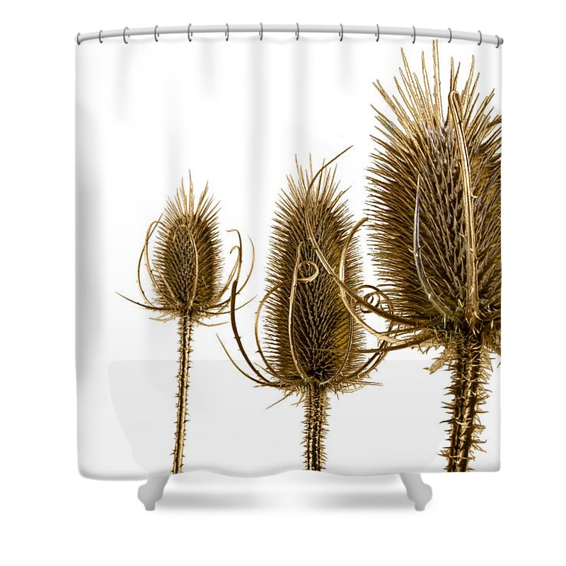 Art Shower Curtain featuring the photograph Prickly Teasels On White by Randall Nyhof