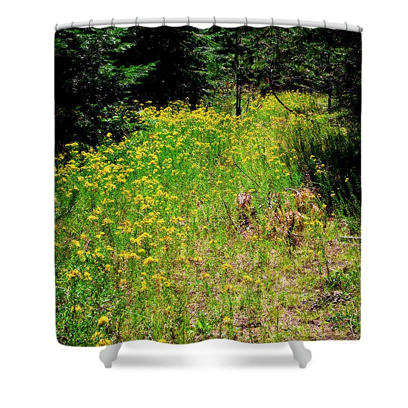 Kalispell Shower Curtain featuring the photograph Priest Lake Trail Series Iv - Small Meadow by David Patterson