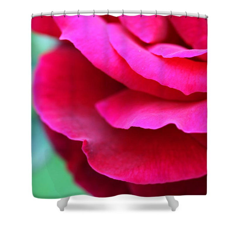 Rose Shower Curtain featuring the photograph Profile Of A Rose by Diana Haronis