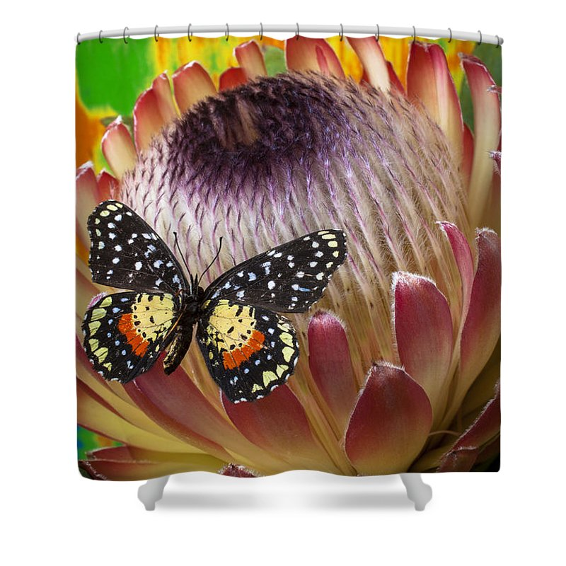Protea Shower Curtain featuring the photograph Protea With Speckled Butterfly by Garry Gay