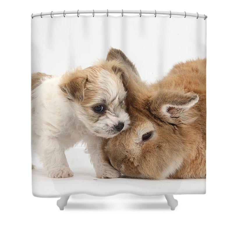 Nature Shower Curtain featuring the photograph Pup And Rabbit by Mark Taylor