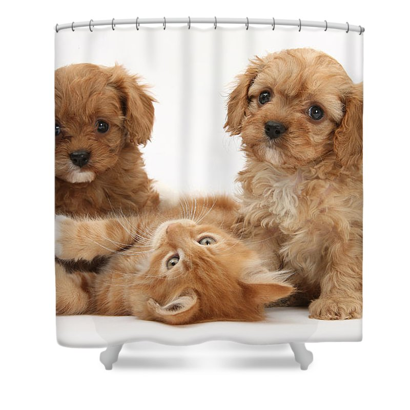 Animal Shower Curtain featuring the photograph Puppies And Kitten by Mark Taylor