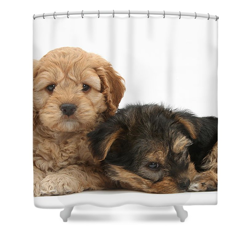 Dog Shower Curtain featuring the photograph Puppy Pals by Mark Taylor