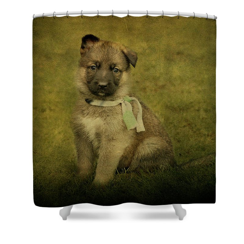 German Shepherd Shower Curtain featuring the photograph Puppy Sitting by Sandy Keeton