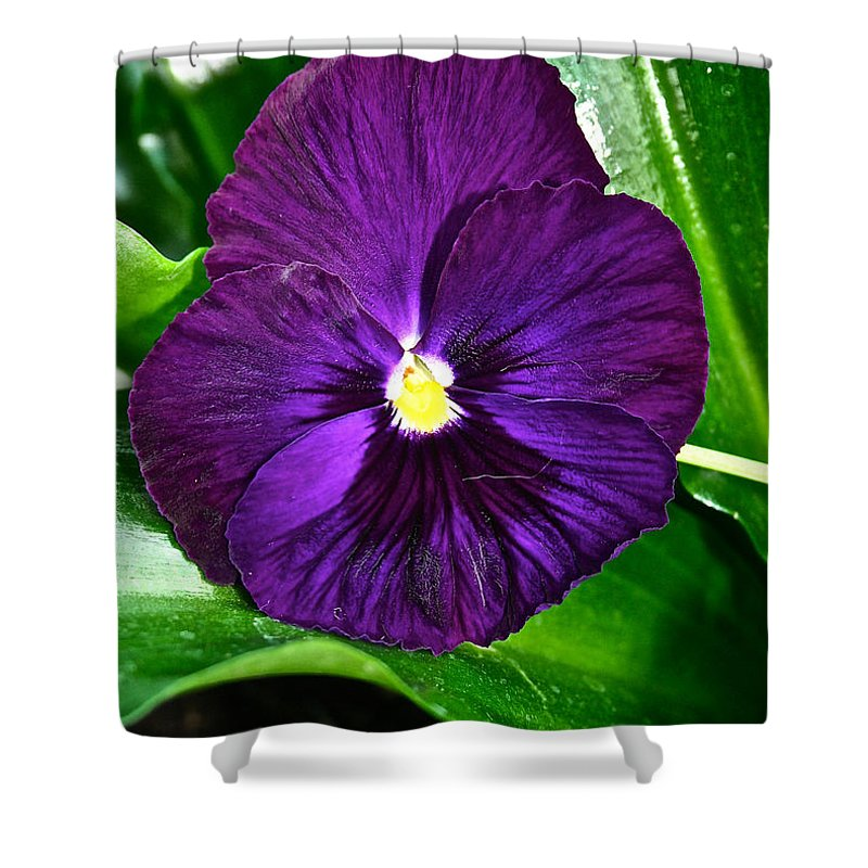 Tropical Plant Shower Curtain featuring the photograph Pure Purple by Susan Herber