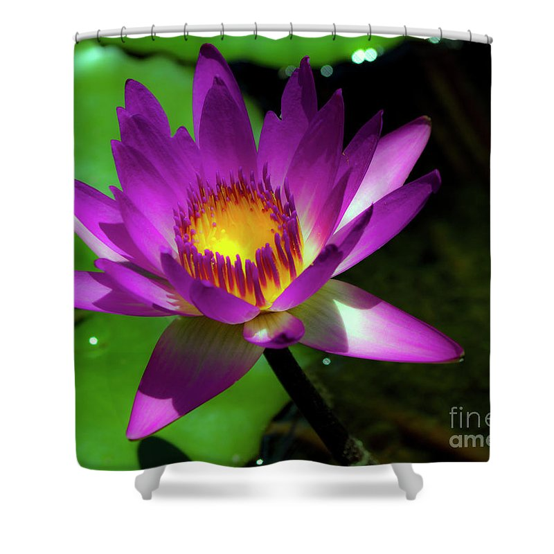 Fine Art Photo Shower Curtain featuring the photograph Purple And Gold Three by Ken Frischkorn