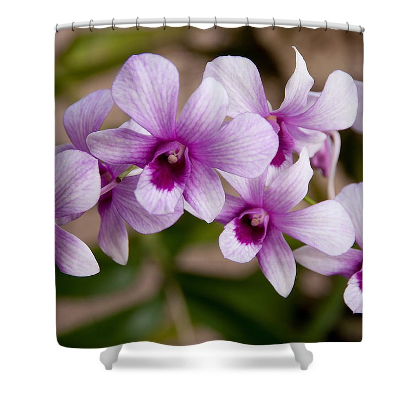 Flower Shower Curtain featuring the photograph Purple And White Orchids by John Black