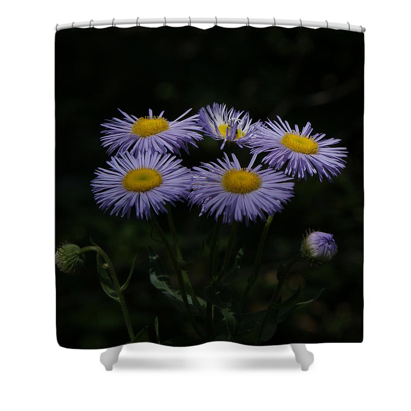 Asters Shower Curtain featuring the photograph Purple Asters by Ernie Echols
