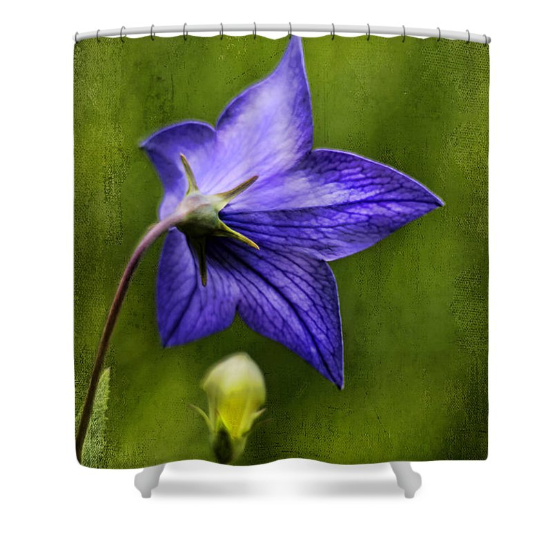 Beautiful Shower Curtain featuring the photograph Purple Balloon Flower by Darren Fisher