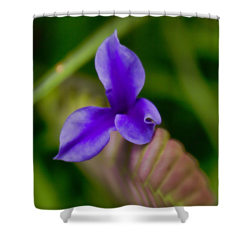 Purple Shower Curtain featuring the photograph Purple Bromeliad Flower by Douglas Barnard